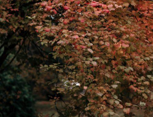 Peterstiftelsens retreater denne høsten